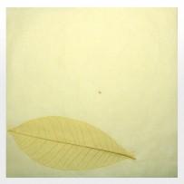 Бумага декоративная (№16)